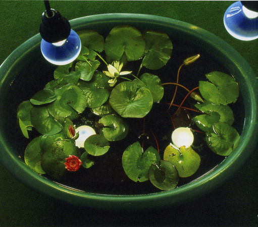 Ulrika Byttner, artiste en résidence, 2001